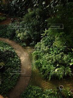 風景,森林,緑,景色,草,樹木,道,温室,見下ろす