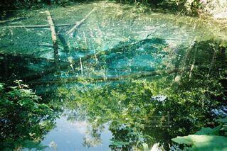 自然,屋外,青,透明,水面,池,反射,フィルム,フィルムカメラ,フィルム写真