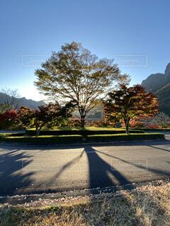 自然,風景,空,秋,道路,影,樹木,アスファルト