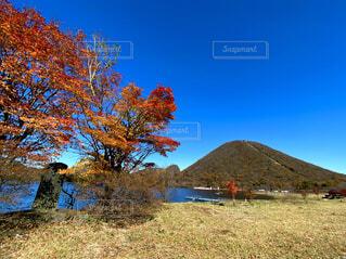 風景,空,秋,湖,雲,山,草,樹木,草木,日中