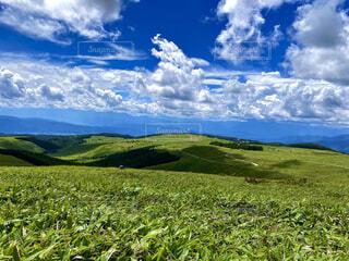 風景,空,草原,雲,青い空,山,景色,草,丘,霧ヶ峰,草木