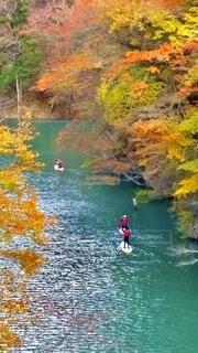 自然,秋,紅葉,赤,黄色,川,水面