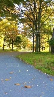 自然,秋,森林,屋外,葉,樹木,落葉,黄色い葉