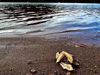 屋外,湖,枯葉,水面,地面