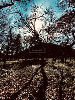 自然,空,森林,屋外,影,シルエット,樹木
