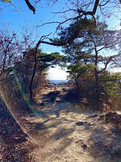 自然,空,森林,屋外,山,景色,登山,樹木,地面