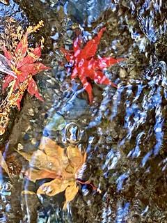 自然,紅葉,屋外,水,水面,もみじ,落ち葉