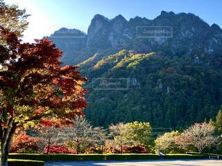 自然,風景,空,秋,屋外,山,景色,樹木,草木