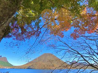 自然,空,秋,紅葉,湖,葉,山