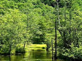 樹木と水面の写真・画像素材[4093779]