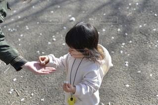 子ども,桜,屋外,花びら,少女,幼児,どうぞ