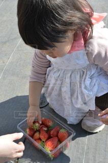 子ども,少女,いちご,苺,人,幼児,いちご狩り,大好物,イチゴ