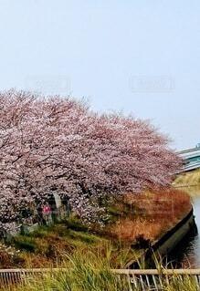 風景,空,桜,屋外