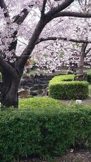 公園,花,屋外,草,樹木,草木,ガーデン