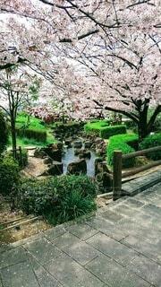 花,春,屋外,緑,樹木,地面,墓,草木,ガーデン