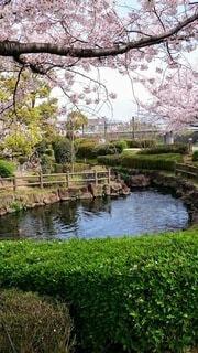 自然,公園,花,屋外,湖,川,水面,池,草,樹木,草木,ガーデン