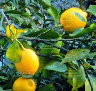 果樹のクローズアップの写真・画像素材[4313895]