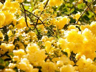 花のクローズアップの写真・画像素材[4334294]