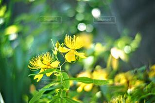 花のクローズアップの写真・画像素材[4461077]
