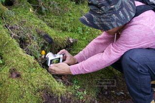 トレッキング中にキノコの撮影をする男性の写真・画像素材[4314122]