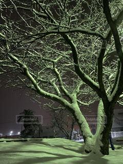 屋外,樹木,夜の公園,草木,九州雪景色
