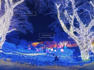 夜,綺麗,青,樹木,イルミネーション,ライトアップ,クリスマス,照明,明るい,デート,青の洞窟,輝き,クリスマスイブ