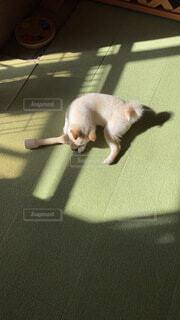 犬,猫,動物,屋内,日光,床,リラックス,子犬,愛犬,腫れ