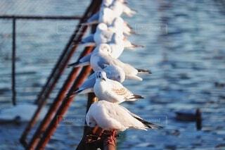 動物,鳥,屋外,水面,景色,小鳥,水鳥