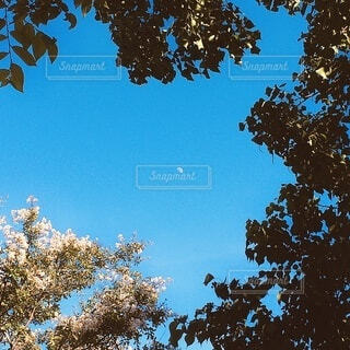 自然,空,屋外,青,青い空,葉,樹木,月,コントラスト,草木,日中