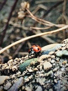 自然,屋外,岩,虫,昆虫,てんとう虫,草木,日中