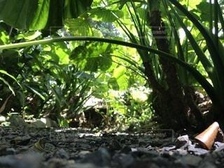 自然,風景,屋外,葉,樹木,トンネル,草木