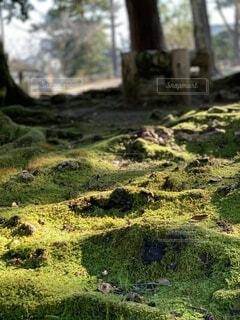 自然,風景,屋外,草,樹木,苔,新緑,島根,草木,松江城,非血管陸上植物