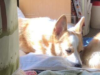 犬,動物,太陽,かわいい,光