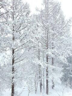 スキー場の木々の写真・画像素材[4050155]