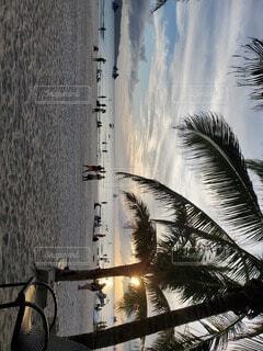 屋外,砂浜,海岸,樹木,ヤシの木,ボラカイ