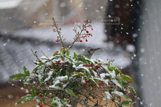 自然,花,冬,鳥,雪,雪景色,冷たい,草木,冬の風物詩