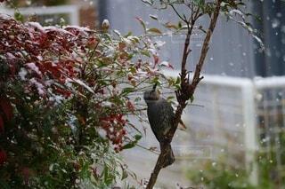 花,冬,動物,鳥,雪,雪景色,草木,冬の風物詩