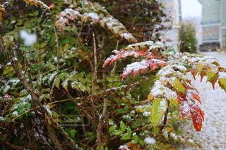 花,冬,葉,雪景色,草木,冬の風物詩