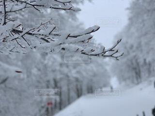 自然,冬,雪,屋外,冬景色,雪景色,樹木,冷たい,草木,冷凍,一面の銀世界