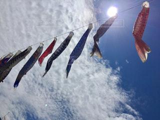 うろこ雲に昇る鯉の写真・画像素材[473575]