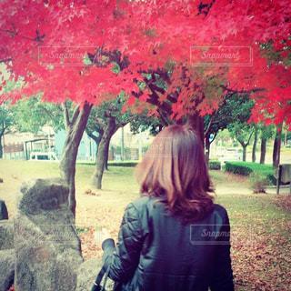 秋見つけ散歩の写真・画像素材[767423]