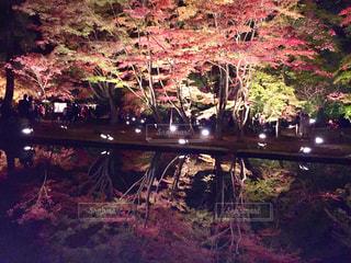 曽木公園の逆さ紅葉の写真・画像素材[767450]