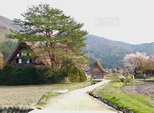 春の白川郷の写真・画像素材[790806]