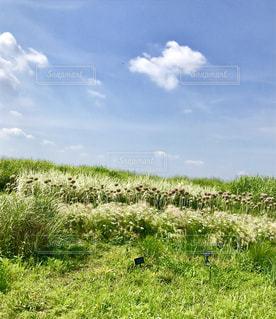 背景の木と大規模なグリーン フィールドの写真・画像素材[1222226]