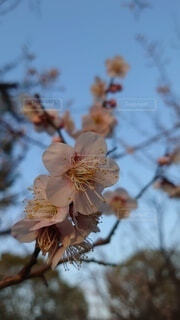 空,花,春,樹木,草木,ブルーム,ブロッサム