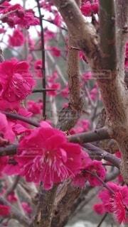 花,鳥,ピンク,赤,草木,ブロッサム,フローラ