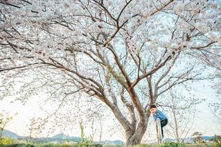 桜の木の下で遊ぶ子供の写真・画像素材[4281503]