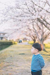 桜を見る子供の写真・画像素材[4281505]