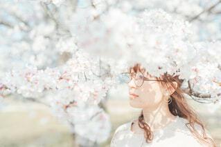 桜日和の写真・画像素材[4306972]