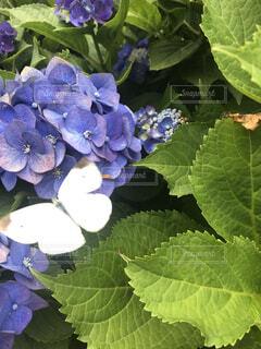 花,葉,景色,紫陽花,蝶々,ガーデン